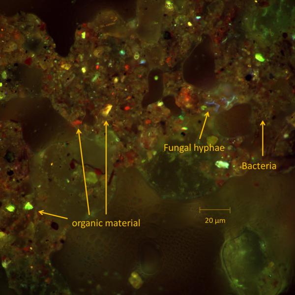 Autofluorescence in a soil sample. Courtesy: Elly Morriën, UVA, Amsterdam