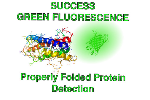 Protein Folding GFP